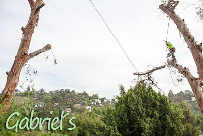 Gabriel´s Tree Service And Landscaping