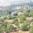 Göllü Köyü Muhtarlığı