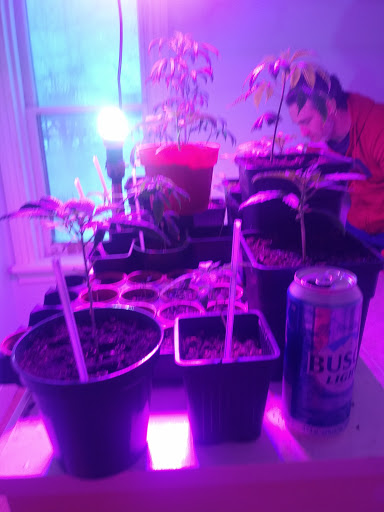 Garden center Molan labe seedbank in ON · In Infused foods () | LiveWay