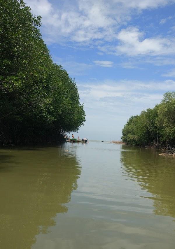 Mangrove Morodemak
