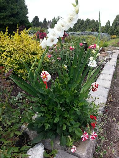Garden center Sun Nurseries in Sussex (NB) | LiveWay