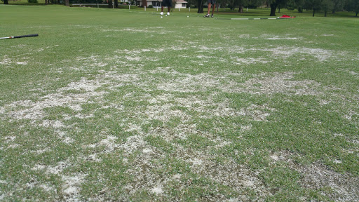 Golf Course «Ocala National Golf Club», reviews and photos, 4782 NW 80th Ave, Ocala, FL 34482, USA