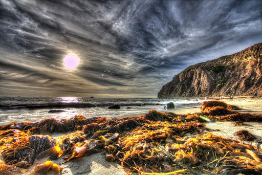 Nature Preserve «Dana Point Nature Interpretive Center», reviews and photos, 34558 Scenic Dr, Dana Point, CA 92629, USA