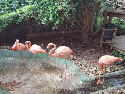 Papagayo Garden