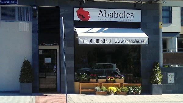 Ababoles Flores y Plantas