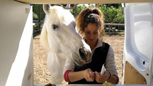 Cavalls Veterinario de Caballos
