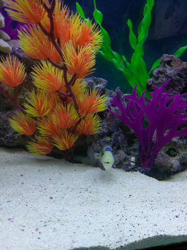 Tropical Fish Store «Rainbow Aquarium and Pond», reviews and photos, 9066 Woodman Ave, Pacoima, CA 91331, USA