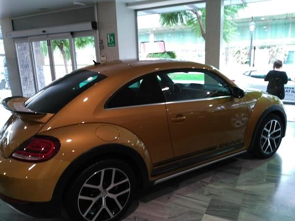 Audi Safamotor Service