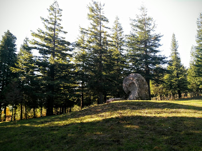 Bosque de Sequoias Poio