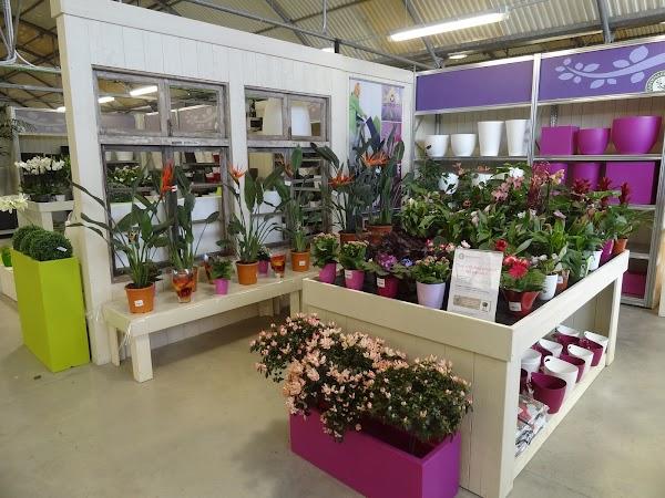 Central de Compras y Servicios de Centros de Jardinería S L