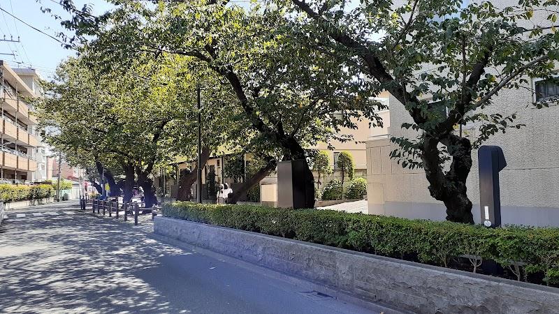 ヴィークステージ南馬込 桜並木通り