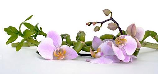 imagen de masajista BailarinaKórporal masajes corporales