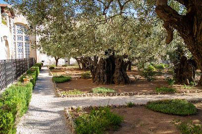 Getsemaní: el monte de los olivos