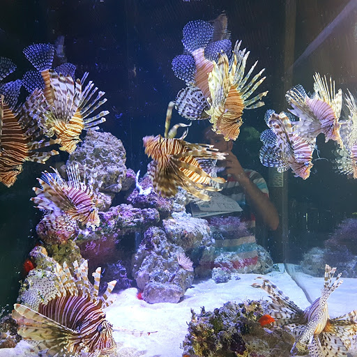 Aquarium «Florida Keys Aquarium Encounters», reviews and photos, 11710 Overseas Hwy, Marathon, FL 33050, USA