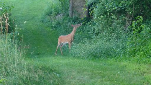 Golf Course «High Bridge Hills Golf Club», reviews and photos, 203 Cregar Rd, High Bridge, NJ 08829, USA