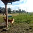 Hall Park Off Leash Dog Park