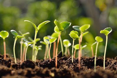 Salient Landscaping, Inc.