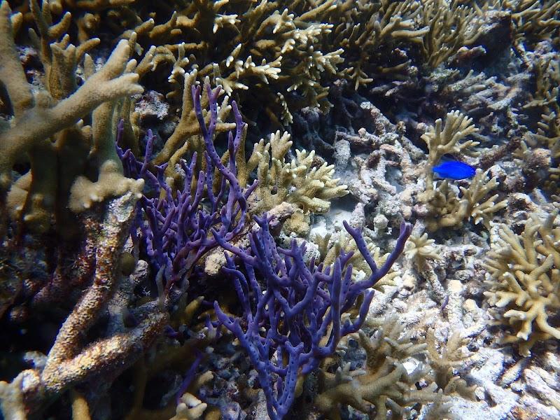 BLUE ALOHA 宮古島(ブルーアロハ 宮古島)