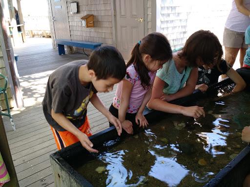Aquarium «Maria Mitchell Aquarium», reviews and photos, 28 Washington St, Nantucket, MA 02554, USA