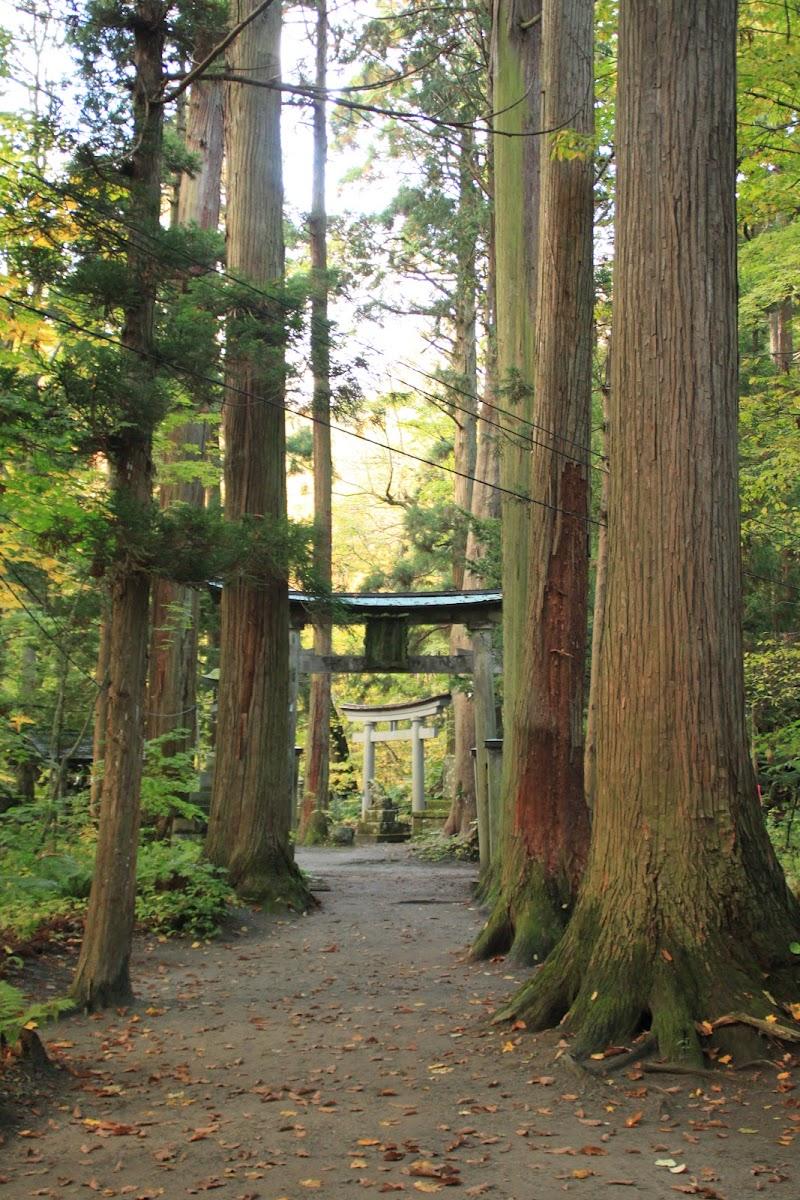 参道の杉並木