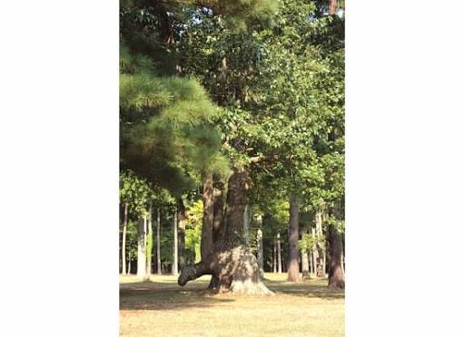 Golf Club «Stumpy Lake Golf Course», reviews and photos, 4797 Indian River Rd, Virginia Beach, VA 23456, USA