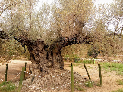 Museu Natural Oliveres Mil·lenàries de l'Arión