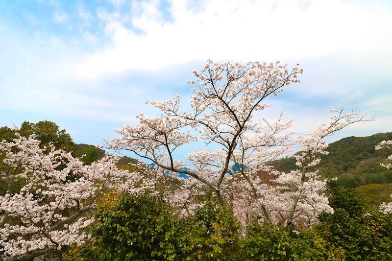 遊学 森 ひろしま の ひろしま遊学の森 広島県緑化センターの紅葉(広島県)の情報|ウォーカープラス
