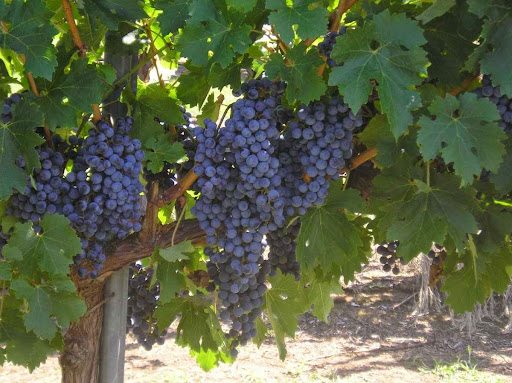 Winery «Arché Winery & Vineyard», reviews and photos, 228 Wagner Rd, St Jo, TX 76265, USA