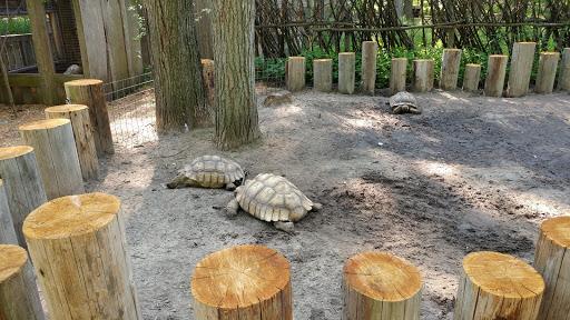 Zoo «Wilderness Trails Zoo», reviews and photos, 11721 Gera Rd, Birch Run, MI 48415, USA