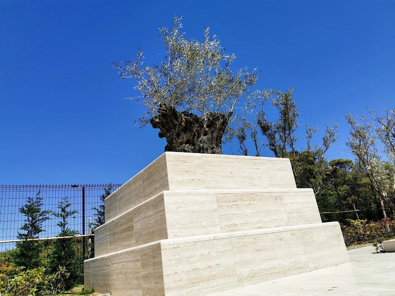 ハピネスパーク 千年オリーブの森 堺和泉(大阪 永代供養付樹木葬専門霊園)