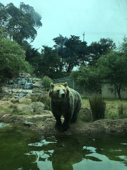 Hearst Grizzly Gulch