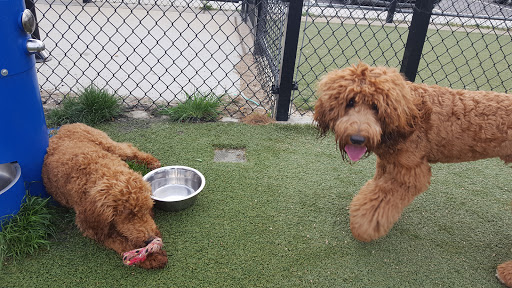 Dog Park «Bay Park Dog Park», reviews and photos, 2 Marjorie Ln, East Rockaway, NY 11518, USA