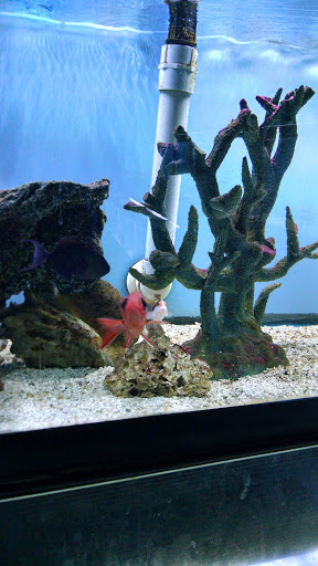 Tropical Fish Store «Ocean Gallery», reviews and photos, 980 US-22, North Plainfield, NJ 07060, USA