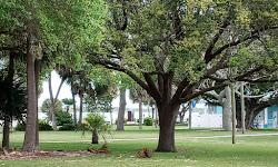 Museum Pointe Park