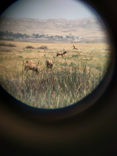 Nature Preserve «Tule Elk Reserve State Natural Reserve», reviews and photos, 8653 Station Rd, Buttonwillow, CA 93206, USA