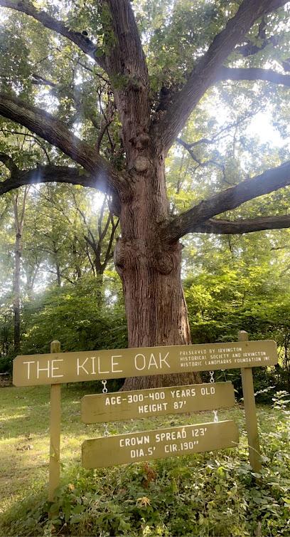 The Kile Oak