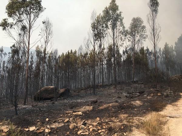 Fire  Arson Investigacion Pericial de Incendios