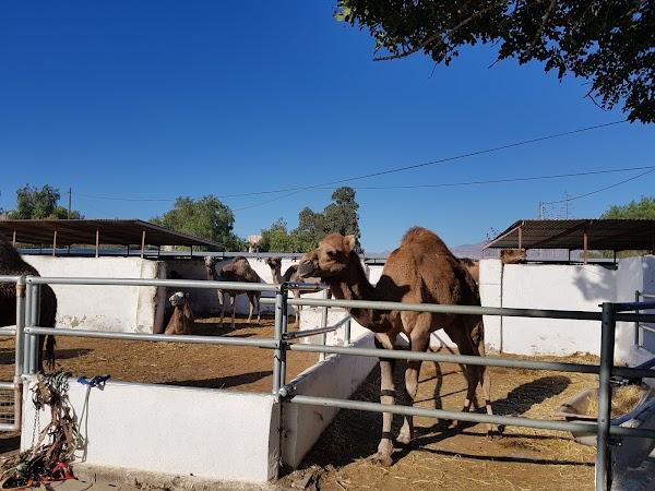 Camellos de Almería, SL