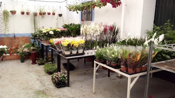 Flores Y Plantas Loli