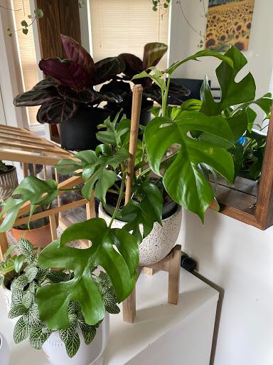 Jardinerie The Jungle à Kingston (ON)   LiveWay