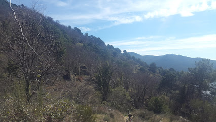 Castañar de Santa Maria del Tietar