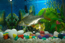 Sona Fish Aquariums Kanpur Nagar Uttar Pradesh India Indiasthan Com