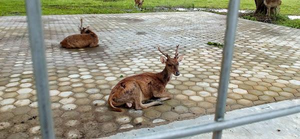 Taman Rusa Bumi Patra Indramayu