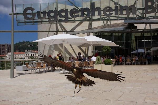 Euskal Falcón - Control Plagas Aves