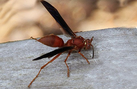 Pest Control Service «Croach», reviews and photos
