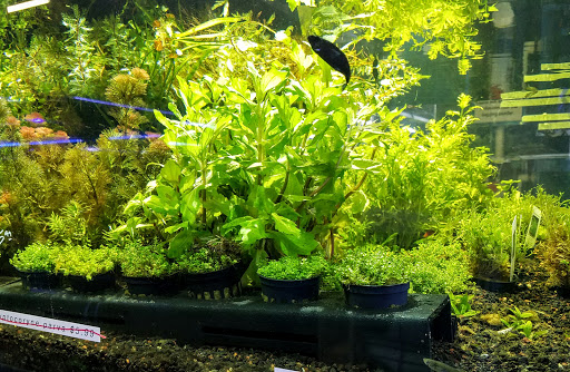 Tropical Fish Store «Aquatic Warehouse», reviews and photos