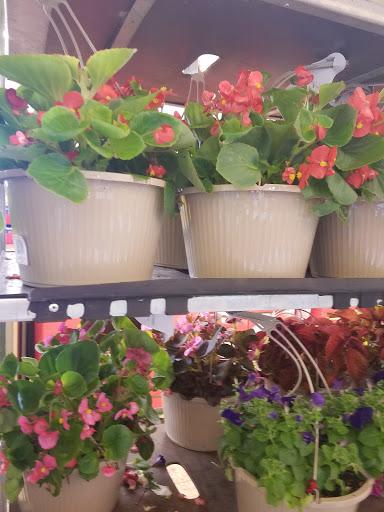 Supermarket «ALDI», reviews and photos, 1284 Boston Rd, Springfield, MA 01119, USA
