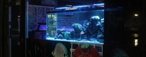 Pet Supply Store «Tropical Island Aquarium Fish Store Long Island», reviews and photos, 2112 Deer Park Ave, Deer Park, NY 11729, USA