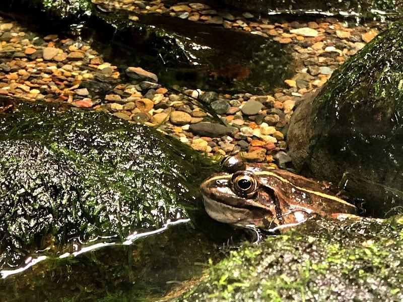 井の頭自然文化園 水生生物園 弁天門