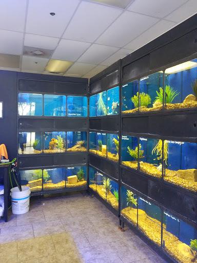 Tropical Fish Store «Aqua Aquarium», reviews and photos, 8805 Jones Rd a101, Jersey Village, TX 77065, USA